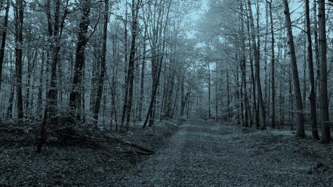 Dorsey & Whitney autumn path slider image