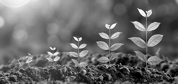 image using plants to depict steady growth as each plant is larger than the previous