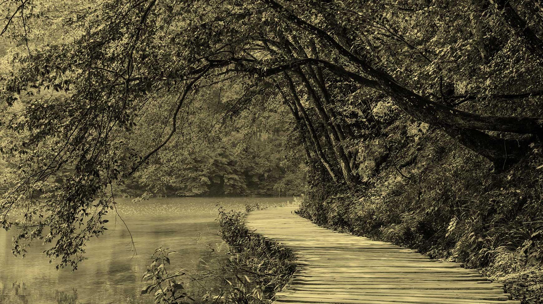 Dorsey & Whitney lake boardwalk slider image